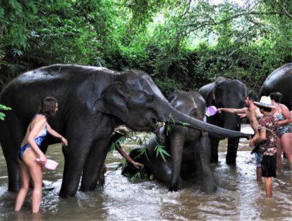 Chiangmai Elephant Home - 3 Days 2 Nights Elephant Experience - Bathing your Elephant