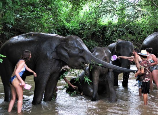 Chiangmai Elephant Home - 3 Days 2 Nights Elephant Experience - Bathing your Elephant