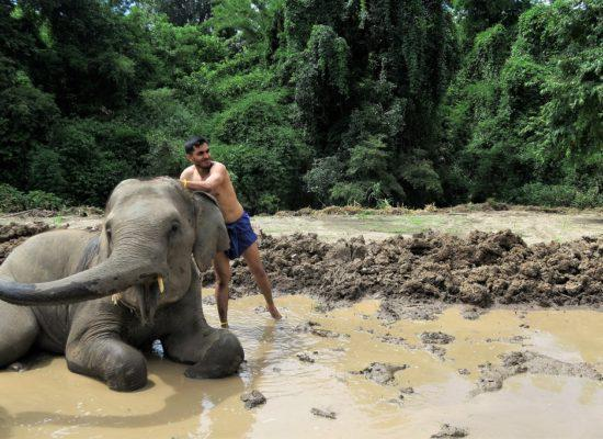 Chiangmai Elephant Home - 3 Days 2 Nights Elephant Experience - Elephant Mud Spa