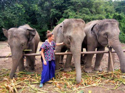 Chiangmai Elephant Home - 3 Days 2 Nights Elephant Experience - Feeding your Elephant