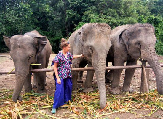 Chiangmai Elephant Home - 3 Days 2 Nights Elephant Experience - Feeding your Elephant