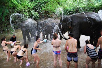 Chiangmai Elephant Home - Half Day Afternoon Elephant Experience - Elephant Bath