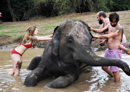 Chiangmai Elephant Home - Half Day Afternoon Elephant Experience - Elephant Mud Spa