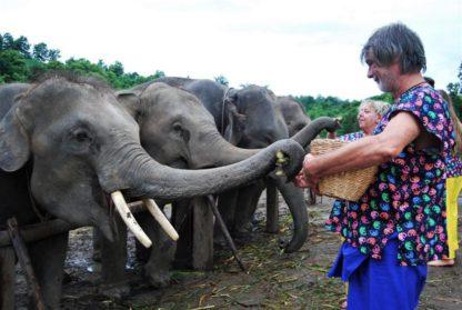Chiangmai Elephant Home - Half Day Afternoon Elephant Experience - Feeding Elephant