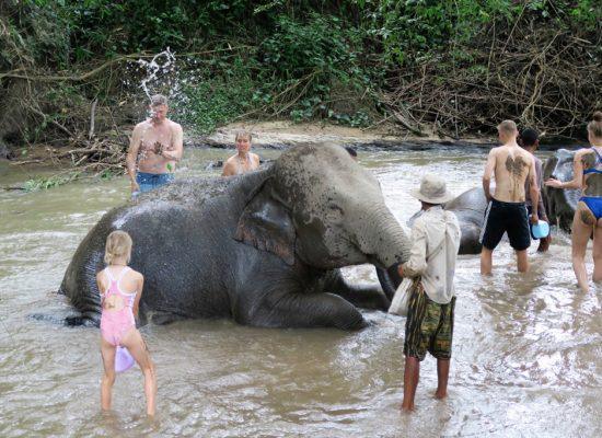 Chiangmai Elephant Home - Half Day Morning Elephant Experience - Bathing your Elephant
