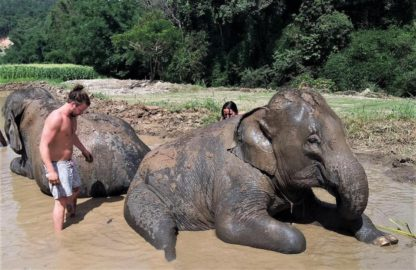 Chiangmai Elephant Home - Half Day Morning Elephant Experience - Elephant Mud Spa