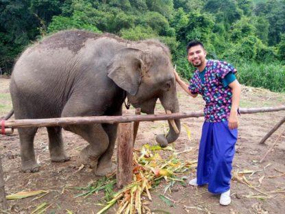 Chiangmai Elephant Home - Half Day Morning Elephant Experience - Feeding Elephant