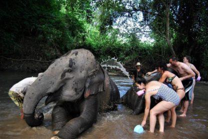 Chiangmai Elephant Home - One Day Hiking and Elephant Experience - Bathing your Elephants