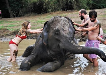 Chiangmai Elephant Home - One Day Hiking and Elephant Experience - Elephant Mud Spa