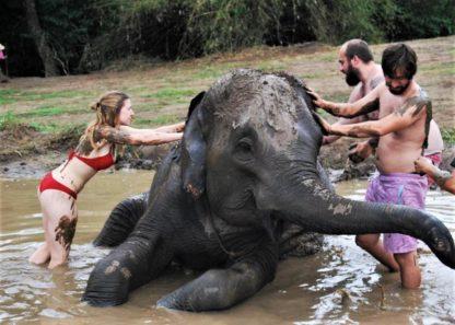 Chiangmai Elephant Home - One Day Hiking and Elephant Experience - Elephant Mud Spa