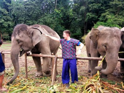 Chiangmai Elephant Home - One Day Hiking and Elephant Experience - Feeding Elephant