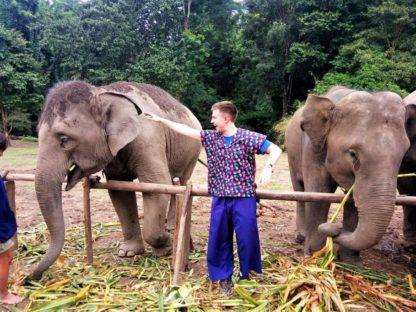Chiangmai Elephant Home - One Day Hiking and Elephant Experience - Feeding Elephant