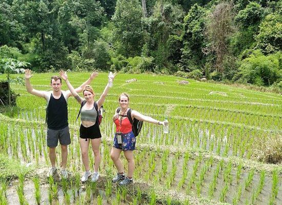 Chiangmai Elephant Home - One Day Hiking and Elephant Experience - Trekking through the rice fields