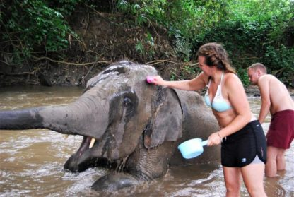 Chiangmai Elephant Home - One day Elephant Experience - Bathing your elephants