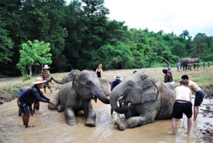 Chiangmai Elephant Home - One day Elephant Experience - Elephant Mud Spa