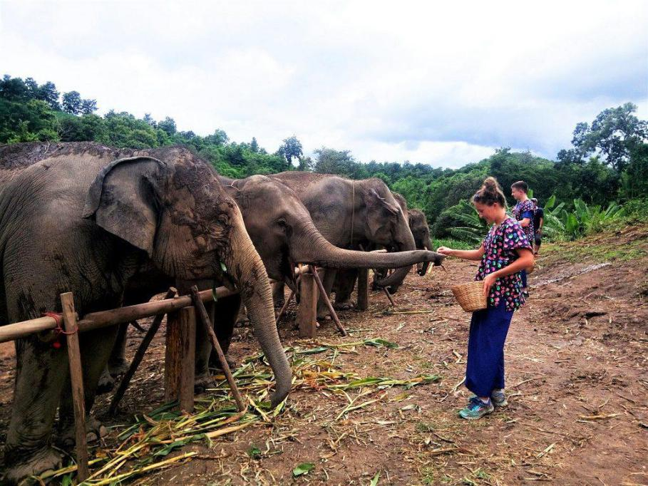 Chiangmai Elephant Home - One day Elephant Experience - Feeding Elephant