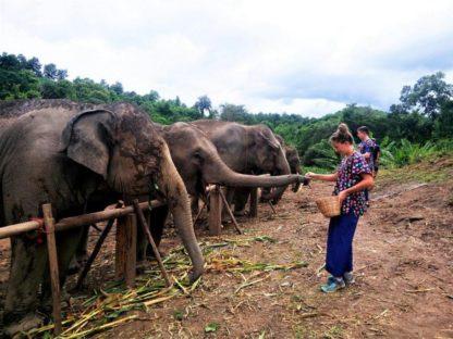Chiangmai Elephant Home - One day Elephant Experience - Feeding Elephant