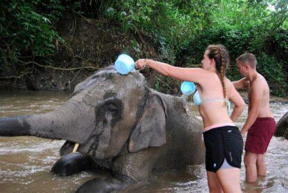 Chiangmai Elephant Home - One day Elephant Experience and ATV - Bathing your elephants