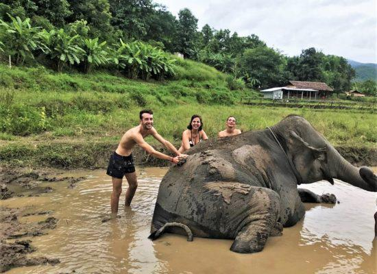 Chiangmai Elephant Home - One day Elephant Experience and ATV - Elephant Mud Spa