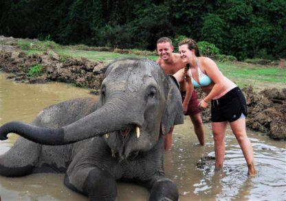 Chiangmai Elephant Home - One day Elephant Experience and ATV - Elephant Mud Spa