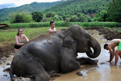 Chiangmai Elephant Home - One day Elephant Experience and Doi Inthanon - Elephant Mud Spa