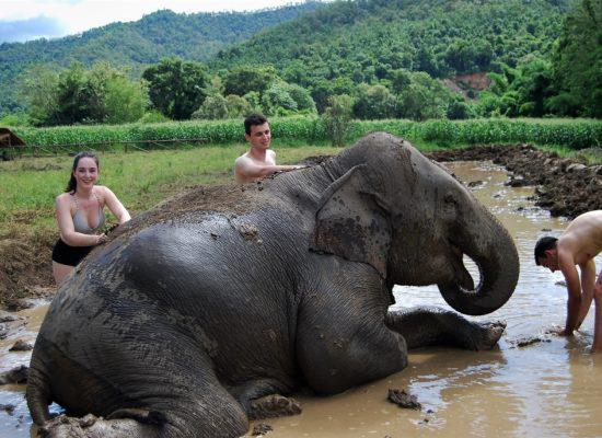 Chiangmai Elephant Home - One day Elephant Experience and Doi Inthanon - Elephant Mud Spa