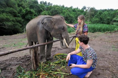 Chiangmai Elephant Home - One day Elephant Experience and Doi Inthanon - Feeding your Elephant