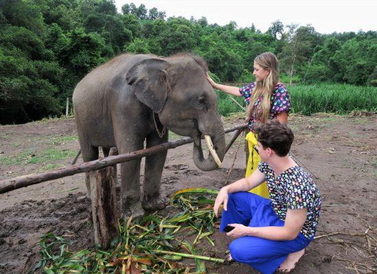 Chiangmai Elephant Home - One day Elephant Experience and Doi Inthanon - Feeding your Elephant