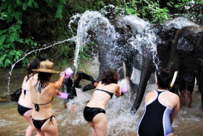 Chiangmai Elephant Home - One day Elephant Experience and Farmer - Bathing you Elephant