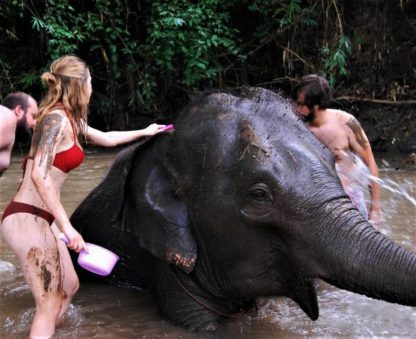 Chiangmai Elephant Home - One day Elephant Experience and Farmer - Bathing you Elephant