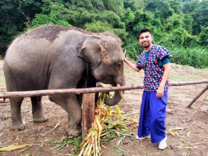 Chiangmai Elephant Home - One day Elephant Experience and Farmer - Feeding your Elephant