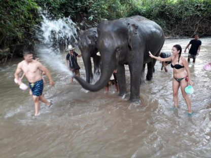 Chiangmai Elephant Home - One day Elephant Experience and Grand Canyon - Bathing your Elephant