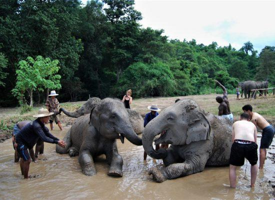 Chiangmai Elephant Home - One day Elephant Experience and Grand Canyon - Elephant Mud Spa
