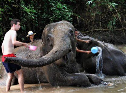 Chiangmai Elephant Home - One day Elephant Experience and Zipline - Bathing your Elephant