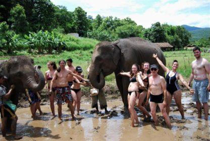 Chiangmai Elephant Home - One day Elephant Experience and Zipline - Elephants mud Spa