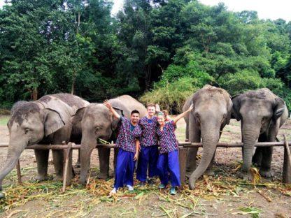 Chiangmai Elephant Home - 2 Days 1 Night Elephant Experience - Feeding Elephant