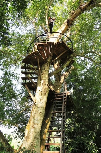 Chiangmai Elephant Home - Zipline Adventure - Spiral Staircases
