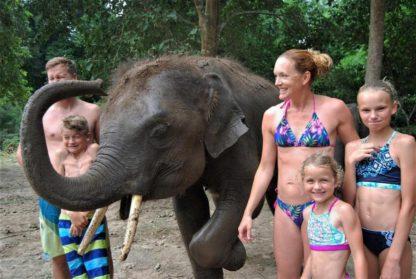 Chiangmai Elephant home - One day Elephant Experience and Doi Inthanon - Elephant close up