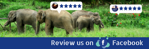 Chiang Mai Elephant Home - Review us on Facebook