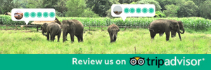 Chiang Mai Elephant Home - Review us on TripAdvisor