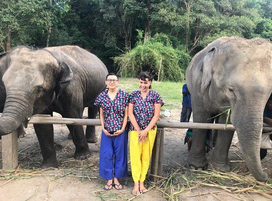 Chiang Mai Elephant Home - 6 Sep 2018 - Half day Afternoon - Group photos