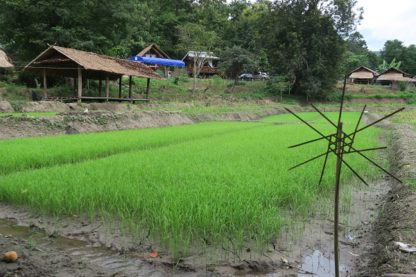 Chiangmai Elephant Home - Farmer program (43)