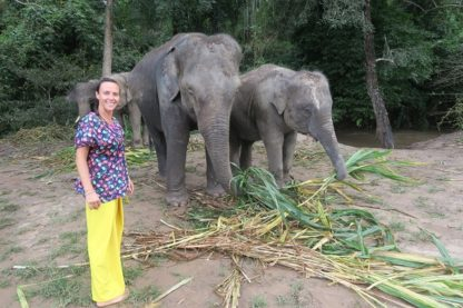Chiang Mai Elephant Home - Half Day Afternoon