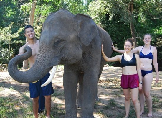 Chiang Mai Elephant Home - 15 Oct 2018 - Half day Morning - Group photos