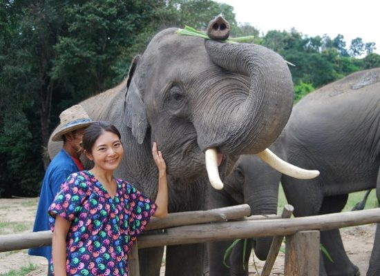 Chiang Mai Elephant Home - 30 Sep 2018 - Half day Afternoon - Group photos
