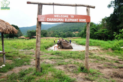 Chiang Mai Elephant Home - View & Environment