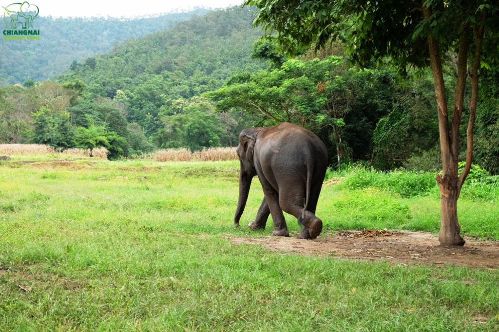 Chiang Mai Elephant Home - View & Environment