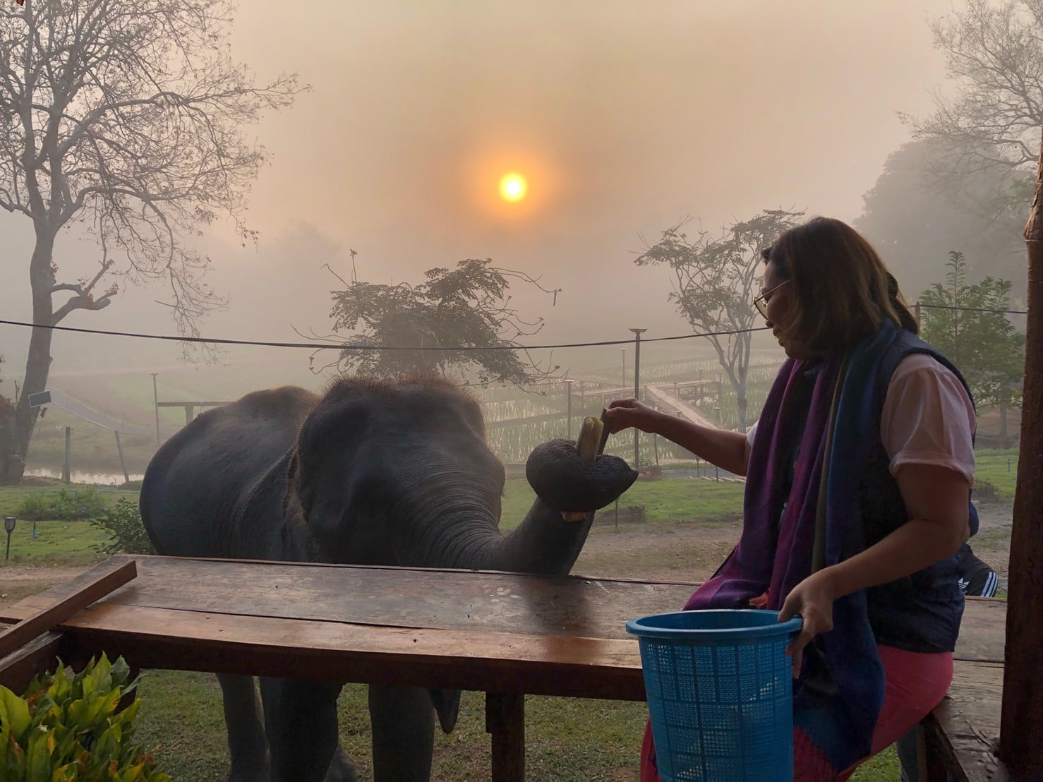 Chiang Mai Elephant home - Bamboo House - บ้านไม้ไผ่ - Maewang - Elephant Morning call