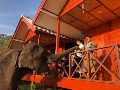 Chiang Mai Elephant home - Family House - Maewang - feeding Elephant