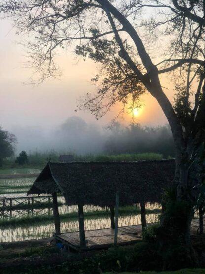 Chiang Mai Elephant home - Teak wood House - Maewang - Morning Landscape